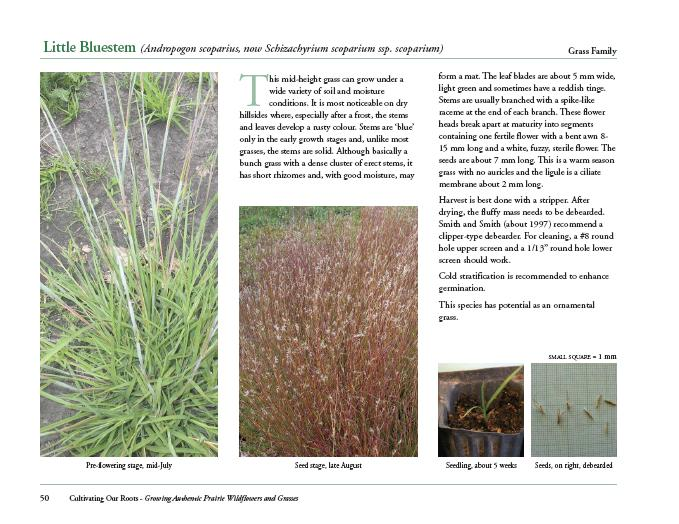 Sample page about the grass species 'Little Bluestem'