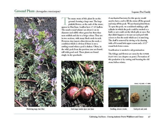 Sample page about the forb species 'Ground Plum'