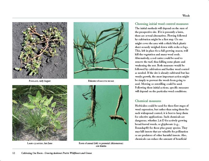 Sample page with images of common problem weeds